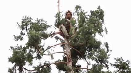 man_in_tree