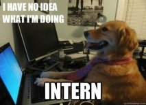 intership_dog